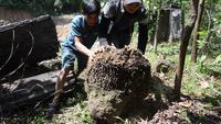 Lên rừng đào tổ mối vỗ béo cho đàn gà