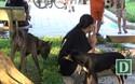 Người dân Hà Nội lo lắng trước tình trạng chó thả rông