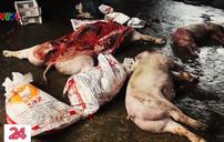 Kinh hoàng cơ sở giết mổ lợn chết, bốc mùi